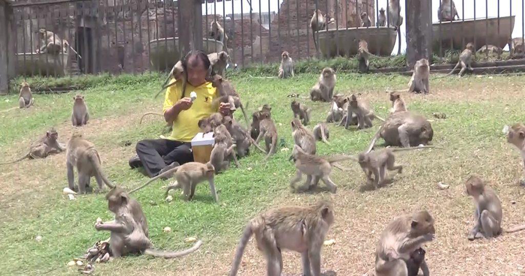 ลิงที่ลพบุรี